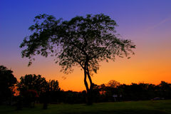 THE TREE AND TWILIGHT SKY. Twilight is the illumination of the Earth's lower atmosphere when the Sun itself is not directly visible because it is below the Stock Photography