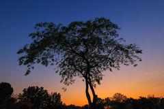 THE TREE AND TWILIGHT SKY. Twilight is the illumination of the Earth's lower atmosphere when the Sun itself is not directly visible because it is below the Royalty Free Stock Images
