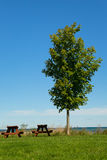 Tree and Two Picnic Tables Stock Images