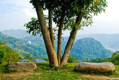 Tree With Two Stone Seats Stock Photo