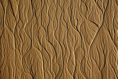 Tree-type texture on the sand beach Royalty Free Stock Image