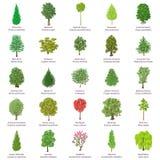 Tree types icons set, isometric style. Tree types icons set. Isometric illustration of 25 tree types vector icons for web Stock Images