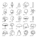 Tree types icons set, outline style. Tree types icons set. Outline illustration of 25 tree types vector icons for web Stock Image
