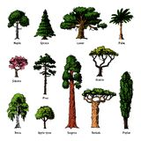 Tree types vector green forest pine treetops collection of birch, cedar and acacia or realistic greenery garden with. Palm and sakura illustration isolated on Stock Photo