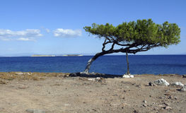 Tree unbeaten by the wind. Lesvos. Greek islands. This lonely tree is situated in the east part of Greek island of Lesvos in very deserted place. Somewhere on stock photo