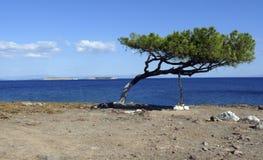 Tree unbeaten by the wind. Lesvos. Greek islands. stock photo