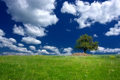 Tree under beautiful blue sky with clouds Stock Photography