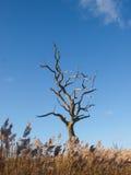 Tree under blåttskyen Arkivfoto
