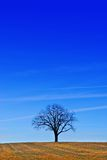 A tree under a blue sky Stock Photography