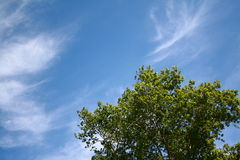 Tree Under Blue Sky. Tree on a background of the dark blue sky with white clouds stock photography