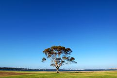 Tree Under Blue Sky. Isolated Tree Under Blue Sky Royalty Free Stock Photo