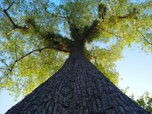Tree under blue sky. Big tree under blue sky Stock Photography