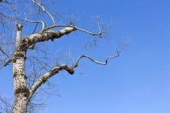 Tree  under blue sky Royalty Free Stock Image