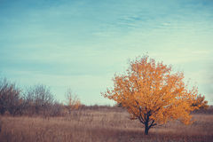 Tree under blue sky with clouds. Single Tree in Outdoor park Under Blue Sky royalty free stock photography