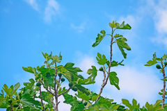 Tree under a blue sky Royalty Free Stock Photo