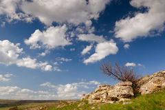 Tree under clouds. Tree at rocks under bright clouds Royalty Free Stock Photography