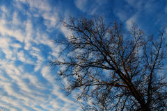 A tree under clouds. A tree in winter is under the clouds Royalty Free Stock Images