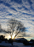 A tree under clouds. A tree in winter is under the clouds Stock Photos