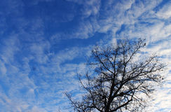A tree under clouds. A tree in winter is under the clouds Stock Images