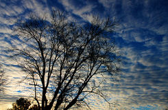 A tree under clouds. A tree in winter is under the clouds Royalty Free Stock Image