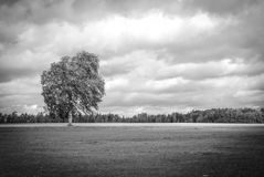 Tree under a cloudy sky. BW photo of a tree in a windy and cloudy morning near Hill of Crosses, Siauliai, Lithuania Stock Images
