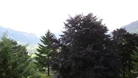 Tree under the drops of rain in the mountainsn. A lonely tree under the drops of rain in the mountains in Switzerlandn stock footage