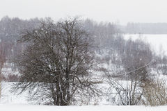 Tree under the falling snowflakes in winter. Royalty Free Stock Photos