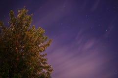 Tree under night sky stock photography