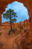 Tree under Sandstone Arch Bryce Canyon Royalty Free Stock Photos