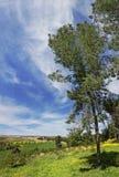 Tree under the sky. Stock Photography