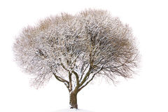 Tree under snow Stock Photography