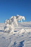 Tree under snow Royalty Free Stock Photography