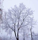 Tree under snow Stock Images