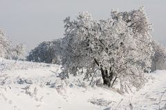 Tree under the snow Royalty Free Stock Photo