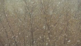 Tree under the snowfall in spring stock footage