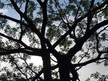 Tree Under Sun Light as the same silhouette Stock Photos