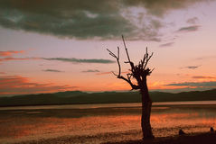 A tree under sunset Royalty Free Stock Photography