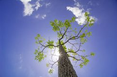 Tree under the sunshine day, Thailand Royalty Free Stock Images