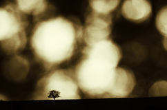 Tree under surreal sky Stock Photography