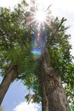 Tree Under The Hot Sun Stock Photography