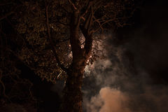Tree Under White Clouds during Night Time Stock Photos