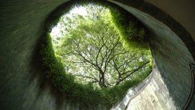 Tree on underground path at park.  stock footage