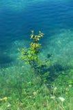 Tree underwater Stock Image