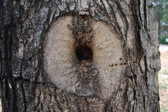 Tree with Unique Hole Stock Photos