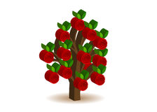 Tree. An unusual volume tree with apples Stock Images