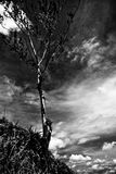 Tree up high. Against the sky in Trinidad Stock Images