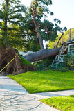 Tree uprooted and crashed into home profile Royalty Free Stock Photo