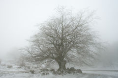 Tree in Urbasa Royalty Free Stock Photography