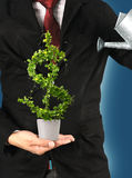 Tree US dollar. Stock Photography
