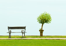 Tree and a vacant bench Stock Image